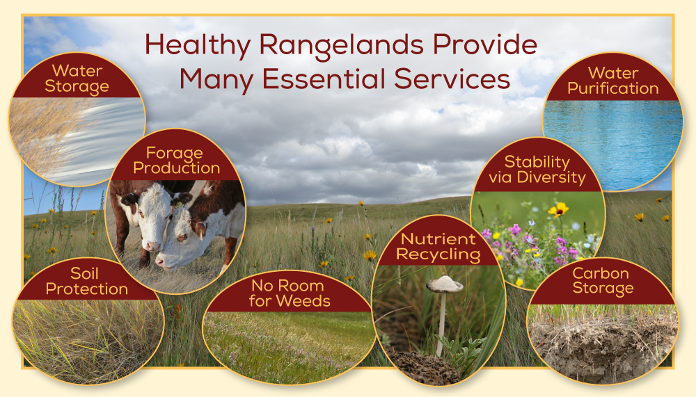 rangeland-services-DIAGRAM